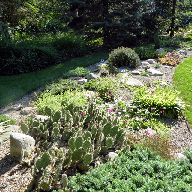 Beautiful I Have An Alpine Garden Where I Have Incorporated Many Rocks In A Gravel  Bed To Grow A Variety Of Alpine And Desert Plants.