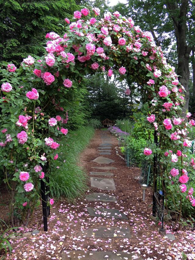 Garden Design Basics 11 Steps