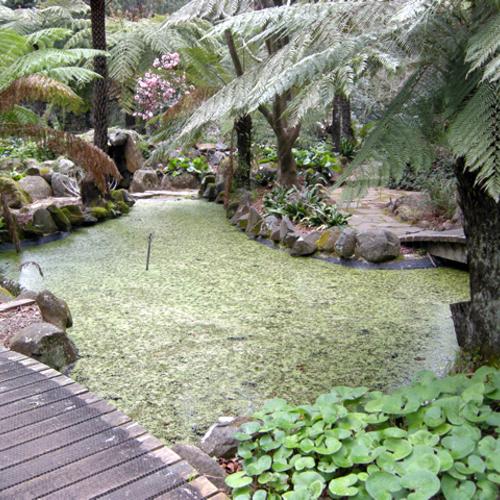 Australian Treasures - FineGardening