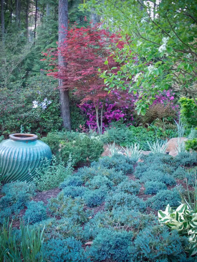 A Collection Of Conifers And Japanese Maples