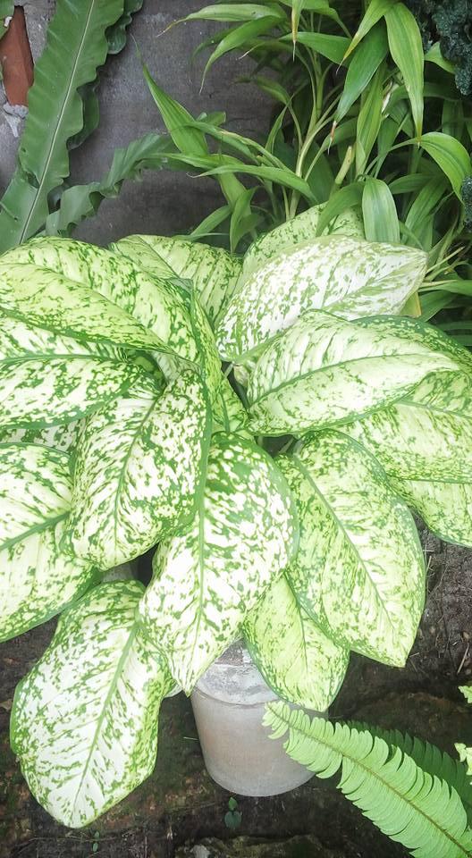 Visit Candice S Lovely Sri Lanka Garden Finegardening