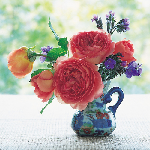 Tips For Cutting Garden Roses To Bring Them In The House Finegardening