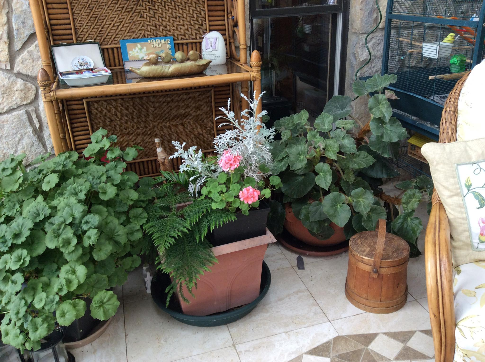 Eddis Garden Indoors And Out In Ohio Finegardening Plants Watering Watcher 2