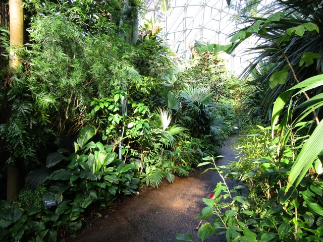 we really werent quite ready to leave the tropics yet were we lets smooth the transition back into winter weather by visiting a tiny slice of the - Botanical Garden St Louis