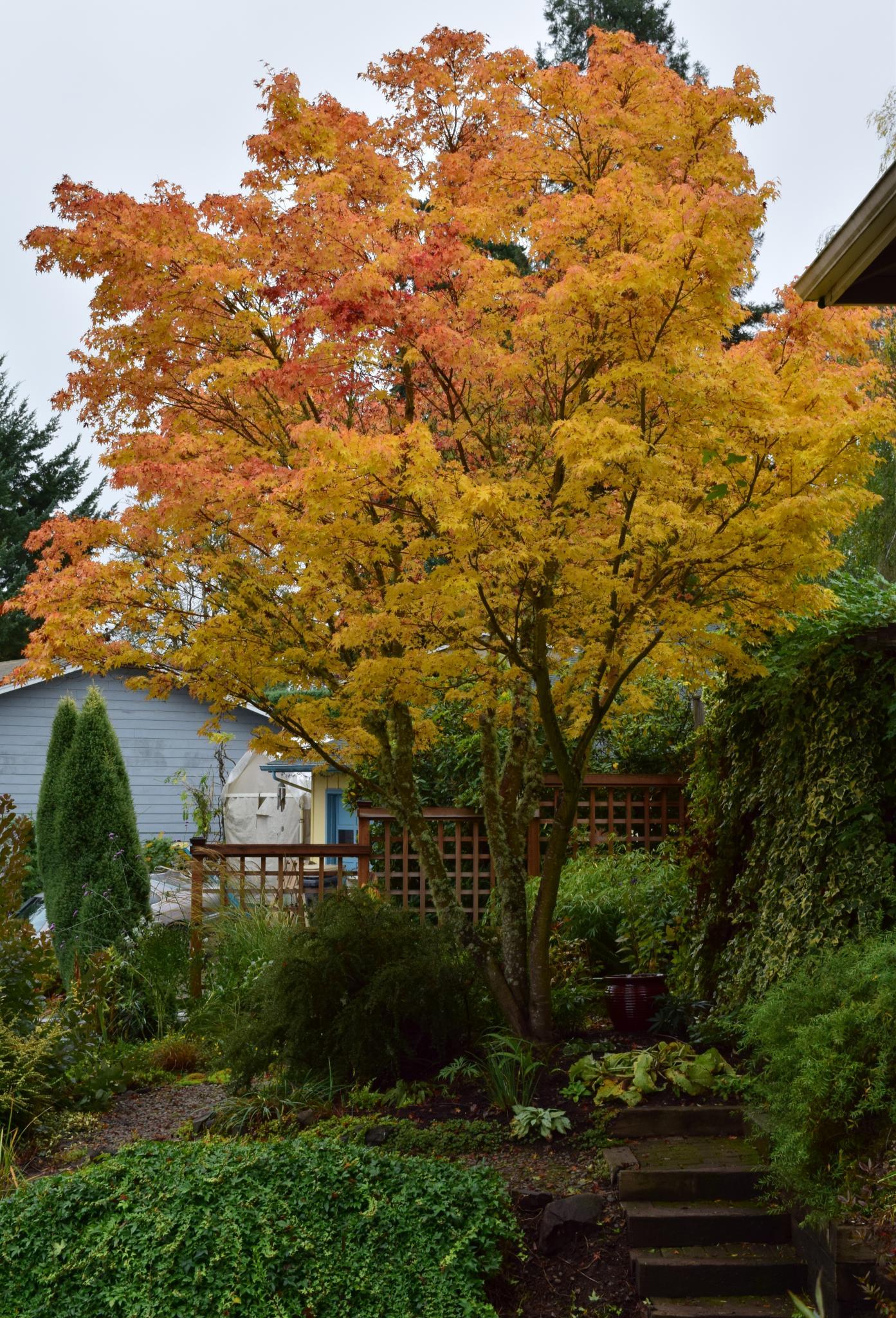 Scenes of October and November in Nancy\'s Oregon Garden - FineGardening