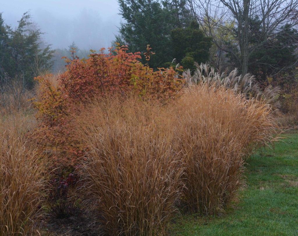 Beautiful grasses in John\'s New Jersey Garden - FineGardening