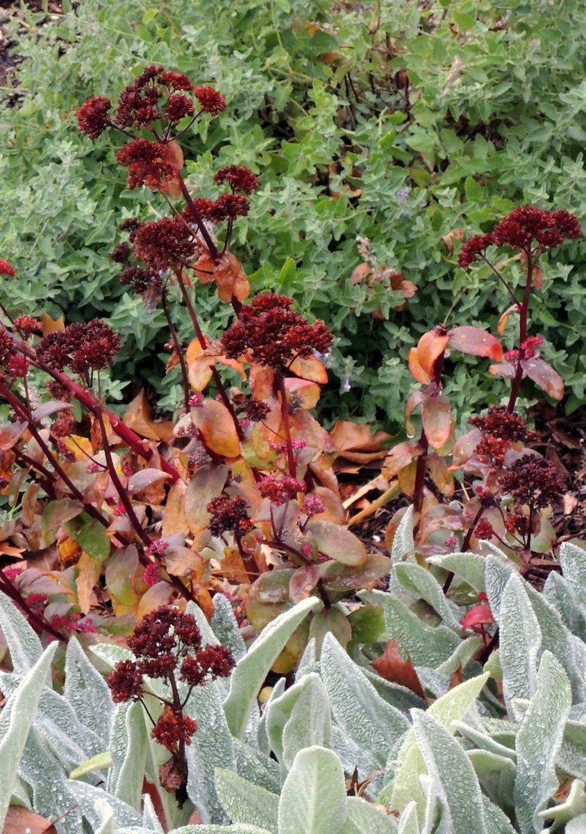 Fall At The Gardens At Oakwood Village Prairie Ridge In
