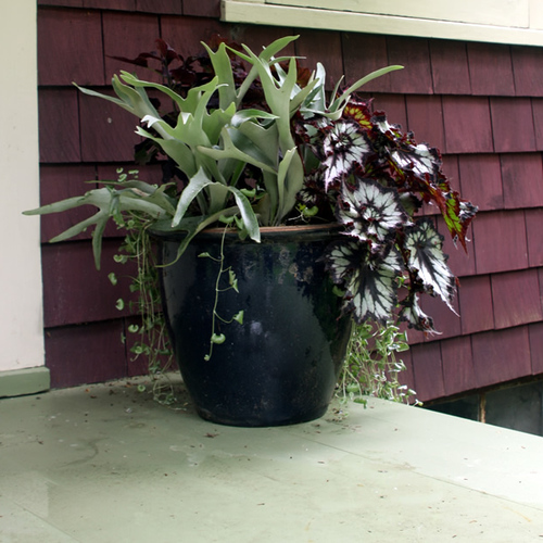 Mother S Day Container Garden Ideas: Designing Containers For Shade: 360-Degree View
