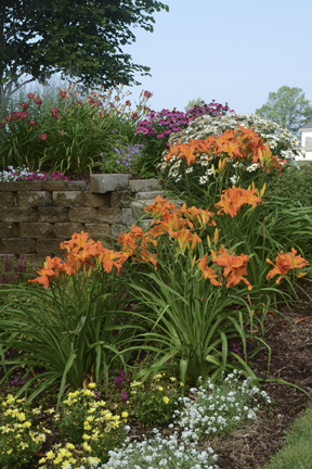 Jeremy\'s garden in Michigan - FineGardening