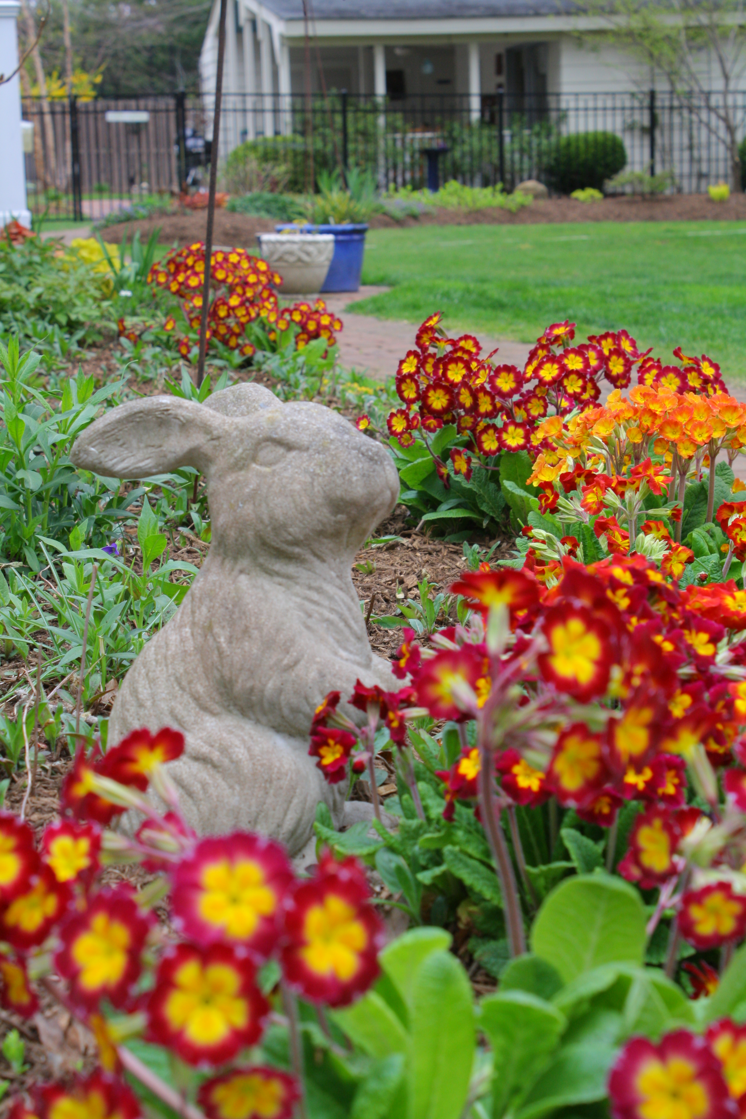 early spring garden with primroses - New Jersey Garden