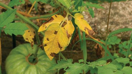 Get Rid of Fungus Gnats - FineGardening