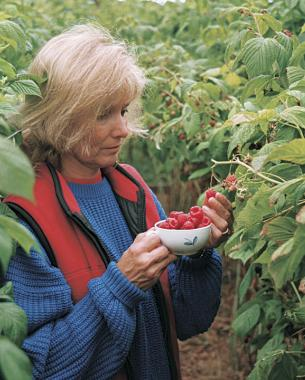 How to Grow Raspberries FineGardening