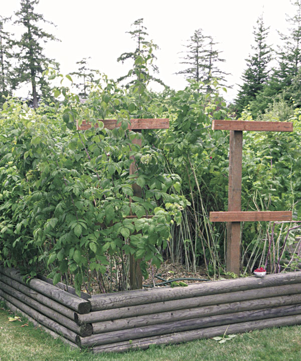 Fine Gardening Trellis Raspberry Raised Bed