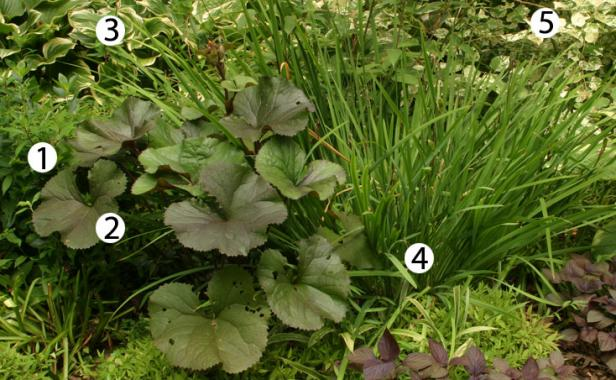 10 Combinations for Shade - FineGardening