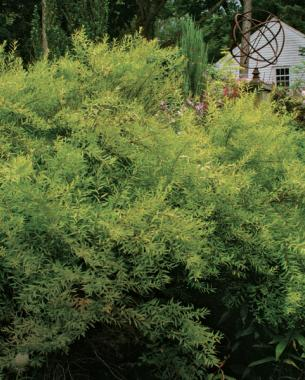 The Best Shrubs For Your Yard