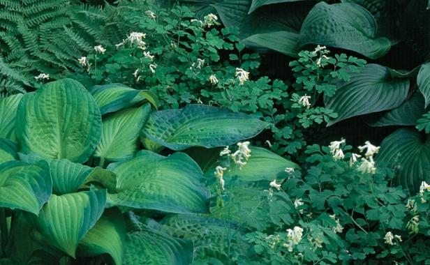 Designing with Hostas - FineGardening on