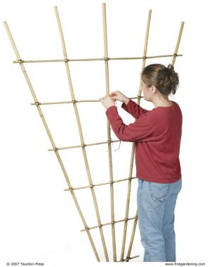 Build a bamboo trellis finegardening the number of vines on my garden wish list will soon outnumber the structures on which i can grow them is that a bad thing you ask solutioingenieria Choice Image