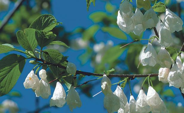 A Parade Of Spring Flowering Trees Finegardening