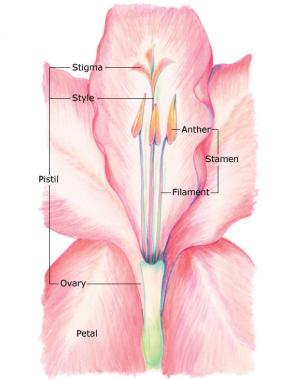 Breed Your Own Gladiolus Hybrids Finegardening