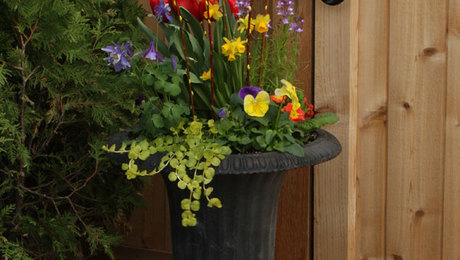 Celebrate spring with cool season containers finegardening spring containers for every style mightylinksfo