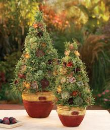 How to make a living succulent topiary – westwood gardens blog.