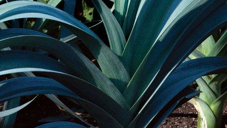 How To Grow Trilliums Finegardening