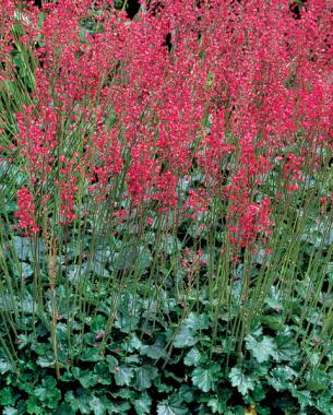 Flowers for hummingbirds mightylinksfo