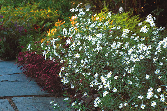 great plants for a fall cutting garden - Fall Garden Plant