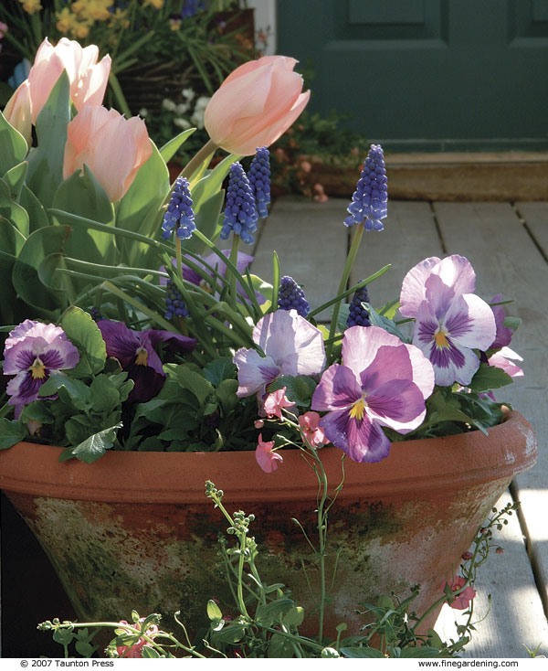 Fill Your Pots With Colorful Plants That Donu0027t Mind Chilly Weather