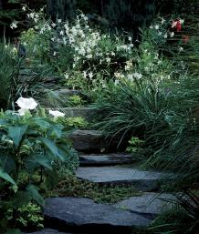 Flowering tobaccos light up the garden finegardening the white flowers of jasmine tobacco nicotiana alata brighten a garden and exude a sweet fragrance at night the authors garden features a sweep of mightylinksfo Image collections