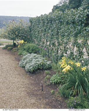 Espalier Designs Dictate Placement In The Garden