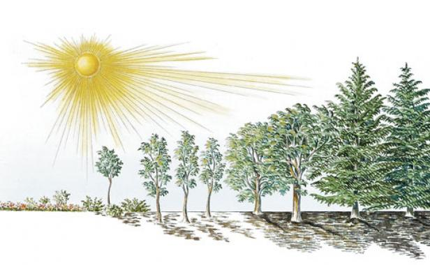 Distinguishing Degrees Of Light And Shade Finegardening
