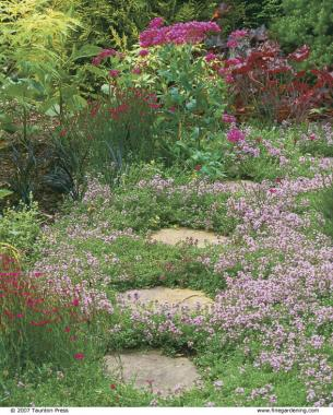 scent under foot and in the perennial border - Thyme Garden
