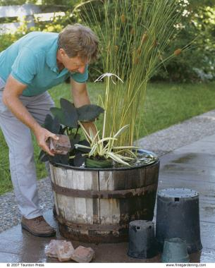 Make a big splash with a tiny water garden finegardening workwithnaturefo