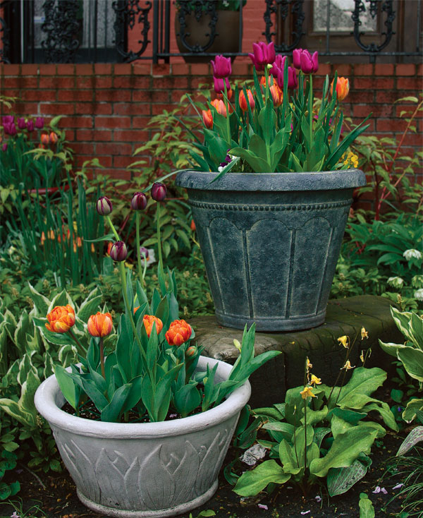 Grow A Garden In Pots How to plant tulips in pots finegardening how to plant tulips in pots workwithnaturefo