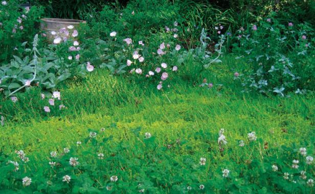 Low-Maintenance Alternatives to Lawns - FineGardening on backyard patio alternatives, backyard gardens, backyard landscaping, backyard play areas,