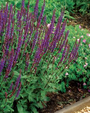 Perennials For The Edge Finegardening