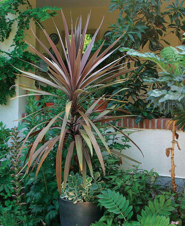 Designing With Spiky Plants