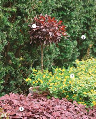2. Create An Eye Elevating Topiary