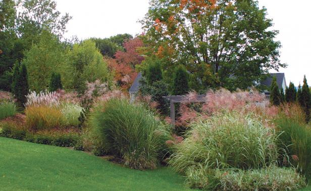 Attirant Masses Of Grasses Create Powerful Visual Statements