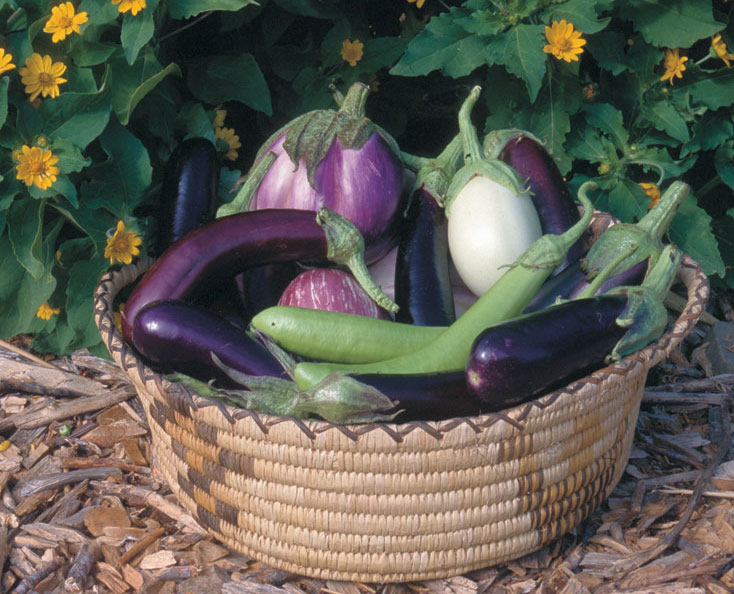 Get An Edge On Starting Eggplants