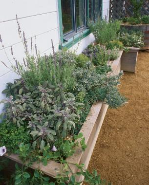 Superb Herb Box à La Provençal Includes Sages (dwarf, Purple, Tricolor), Sweet  Lavender ( L. Heterophylla ), French Lavender ( L. Dentata ), Thymes  (French, Lime, ...
