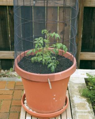 Grow A Garden In Pots How to grow tomatoes in containers finegardening find the right container workwithnaturefo