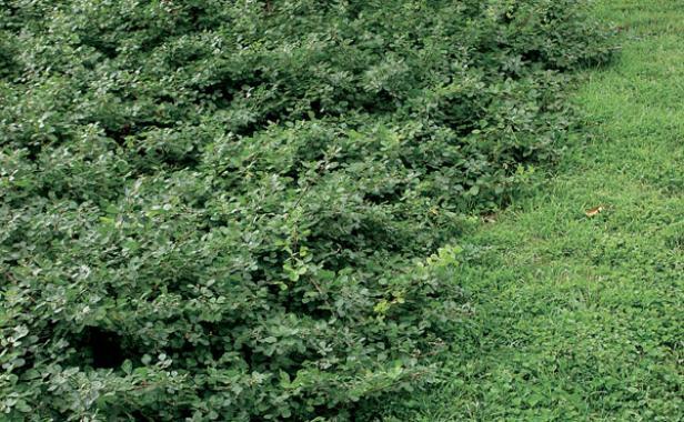 Shrubs for Slopes - FineGardening on garden design home, garden design zone 8, butterfly garden zone 9, garden design canada, garden design zone 4, garden design zone 5, garden design zone 6, fall garden zone 9,