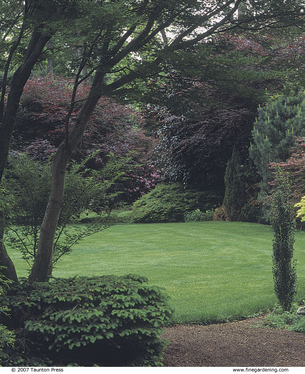 A Bold Border Of Trees And Shrubs Finegardening