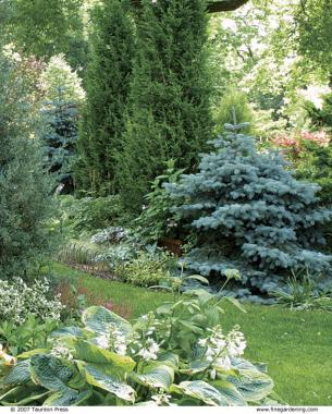 Ordinaire Dwarf Conifers Can Add Verticality