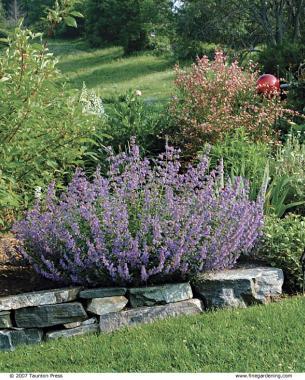 Pick Plants For Fragrance Finegardening