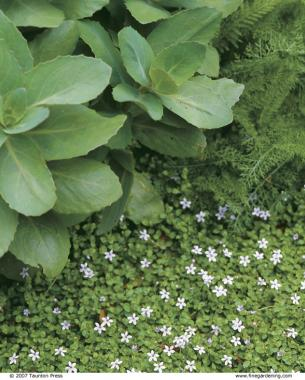 Covering Ground With Creeping Plants Finegardening
