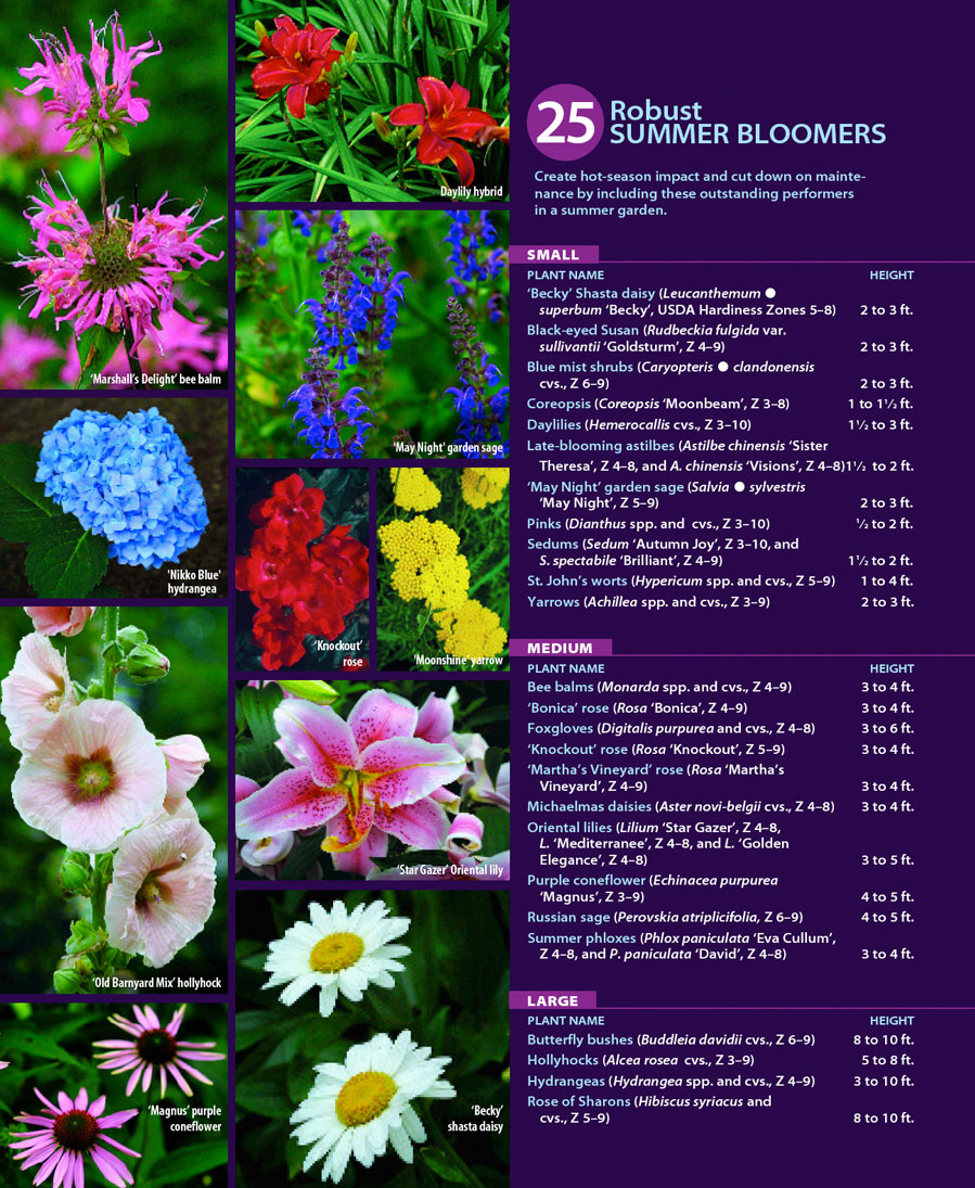 25 robust summer bloomers finegardening choose low care plants mightylinksfo