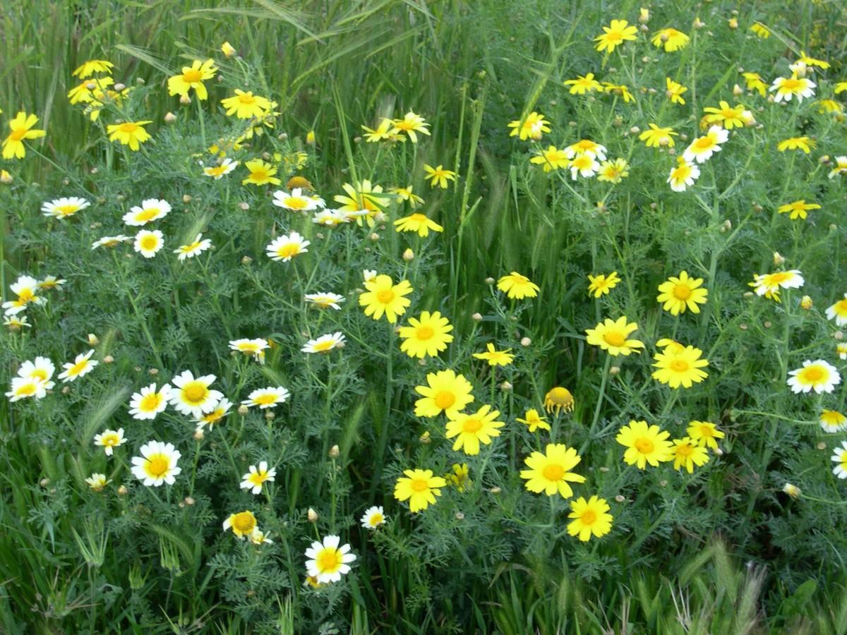 Beautiful Grecian Wildflowers Finegardening